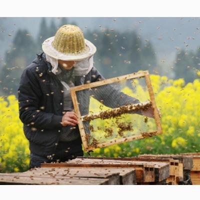 养蜂技术大全 意蜂中蜂 蜜蜂养殖病害防病虫18套资料32GU盘+1书籍